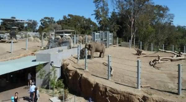 San Diego Zoo entre os melhores zoologicos do mundo