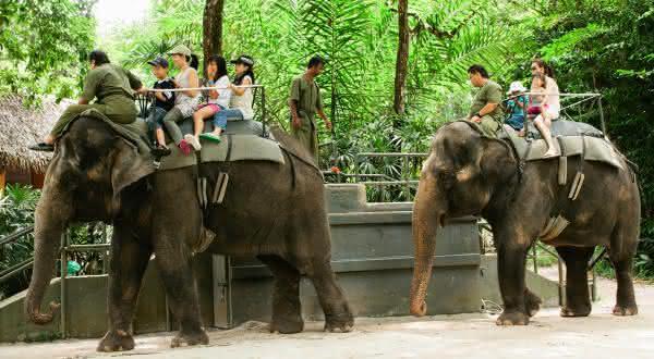 Singapore Zoo entre os melhores zoologicos do mundo