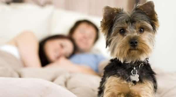 animais de extimacao entre as razoes pelas quais voce nao consegue dormir