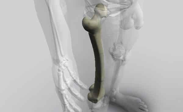 osso femur entre os maiores ossos do corpo humano
