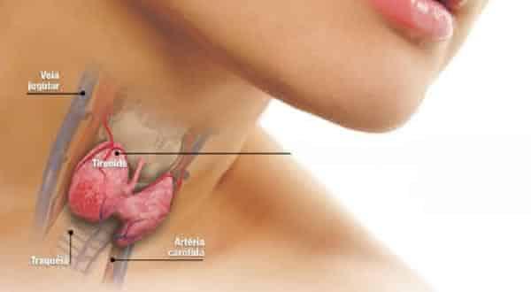 tireoide entre os maiores orgaos do corpo humano