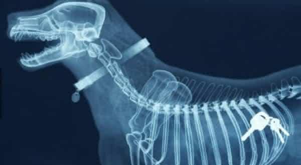 raio x entre as maiores descobertas médicas da história