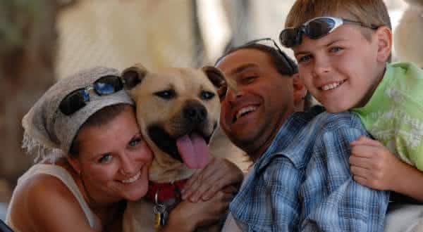 reabilitado entre os fatos equivocados sobre pitbulls