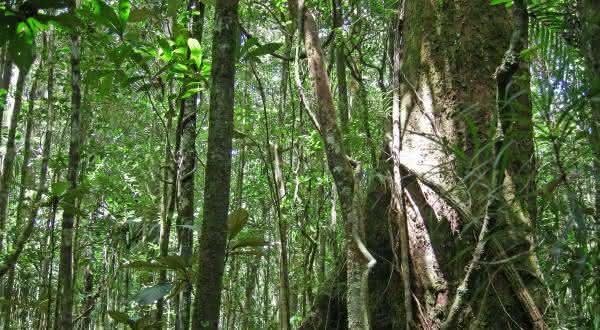 New Caledonia entre as florestas mais ameacadas do mundo