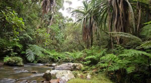 madagascar entre as florestas mais ameacadas do mundo