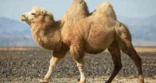 Top 10 animais que podem sobreviver mais tempo sem se alimentar