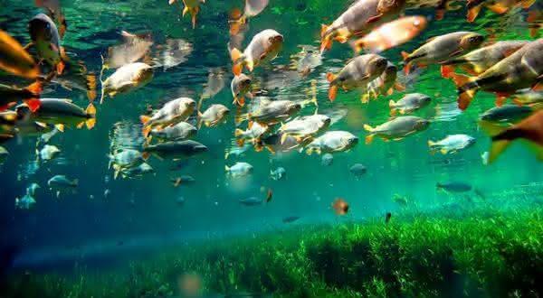 pantanal 2 entre os parques nacionais mais bonitos do brasil