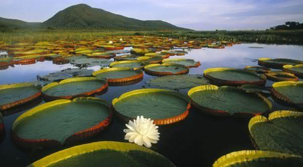 pantanal entre os parques nacionais mais bonitos do brasil
