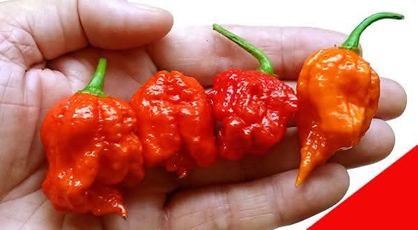 Infinity Chili entre as pimentas mais fortes do mundo