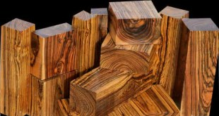 bocote-entre-as-madeiras-mais-caras-do-mundo