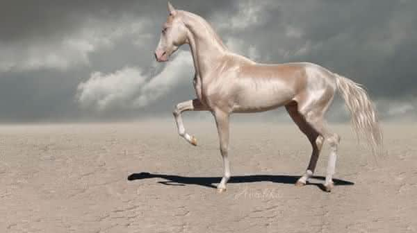 Golden Akhal Teke entre as racas de cavalos mais bonitas do mundo