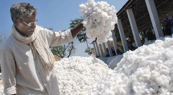 Paquistao entre os maiores paises produtores de algodao do mundo