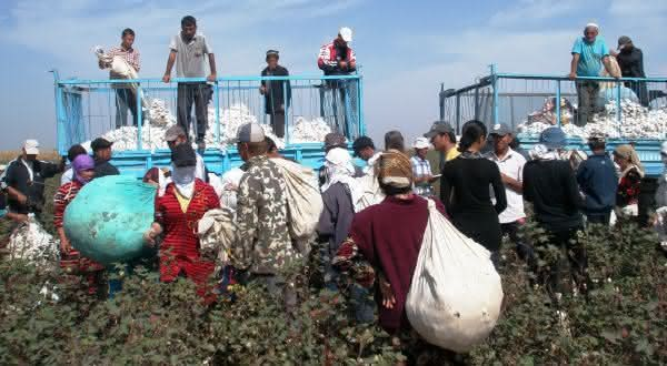 Uzbequistao entre os maiores paises produtores de algodao do mundo