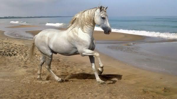 andaluz entre as racas de cavalos mais bonitas do mundo