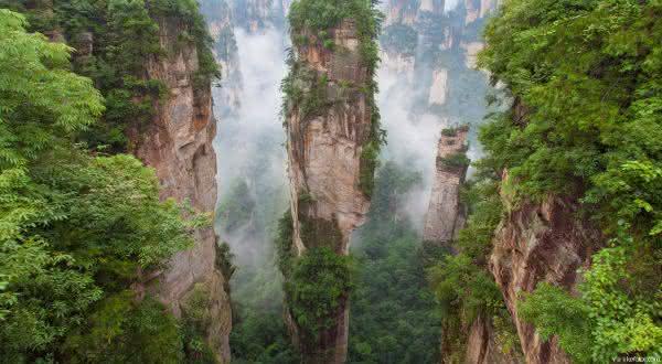 china entre os países com maior área de floresta do mundo