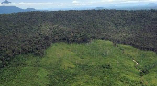 indonesia entre os países com maior área de floresta do mundo