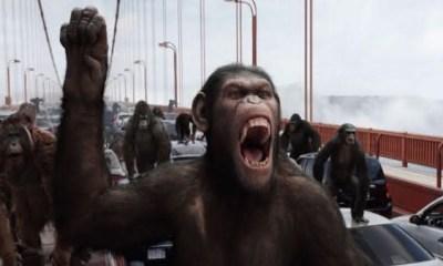 macacos entre as especies que dominariam se os seres humanos morressem