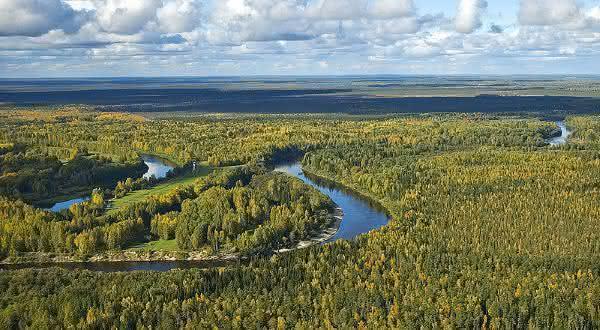 russia entre os países com maior área de floresta do mundo