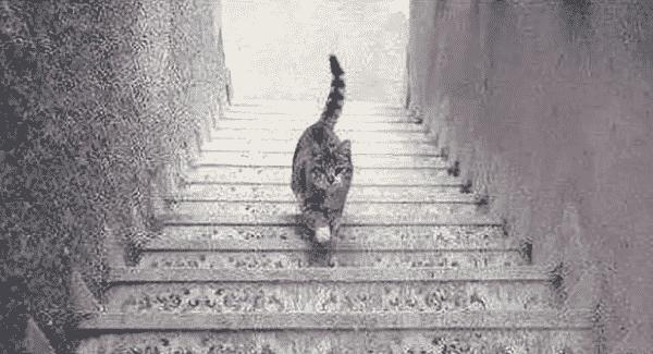 gato na escada entre as ilusões de óptica que te deixarão confuso