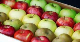 maca entre os alimentos ricos em fibras