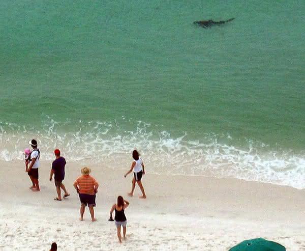 Carolina do Sul entre as aguas com mais tubaroes no mundo