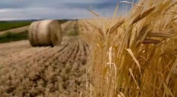 australia entre os maiores exportadores de alimentos do mundo