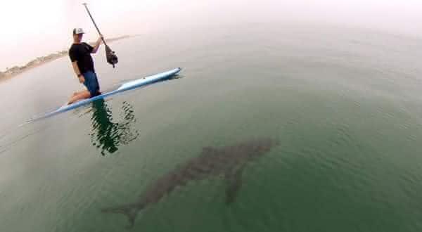 california entre as águas com mais tubarões no mundo