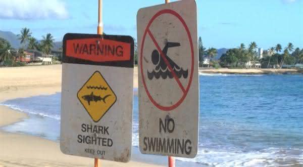 havai entre as aguas com mais tubaroes no mundo