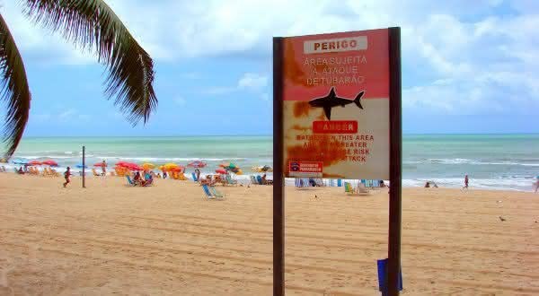 recife entre as águas com mais tubarões no mundo