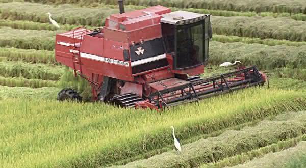 brasil entre os maiores exportadores de arroz do mundo