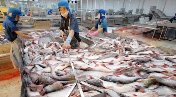 china entre os maiores exportadores de peixes do mundo