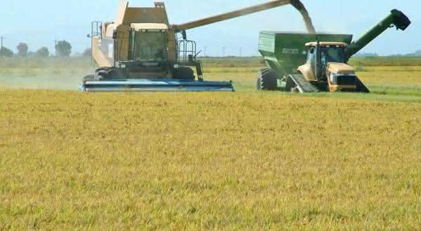 estados unidos entre os maiores exportadores de arroz do mundo