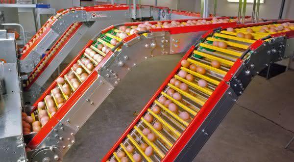 estados unidos entre os maiores paises produtores de ovos do mundo