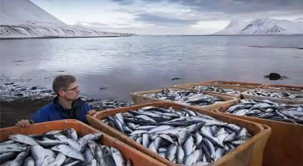 russia entre os maiores exportadores de peixes do mundo