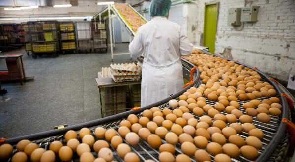 russia entre os maiores paises produtores de ovos do mundo