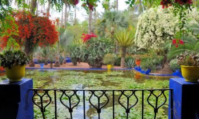 Majorelle Garden 2 entre os jardins mais bonitos do mundo