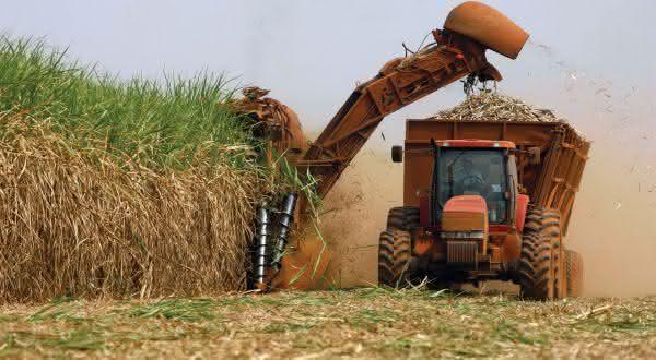 brasil entre os maiores exportadores de açúcar do mundo
