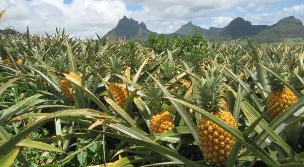 costa rica entre os maiores exportadores de frutas do mundo