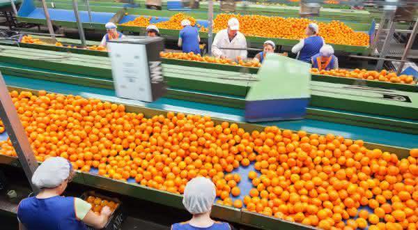 espanha entre os maiores exportadores de frutas do mundo