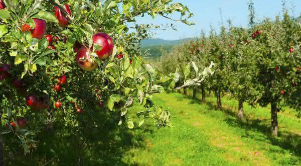 estados unidos entre os maiores exportadores de frutas do mundo