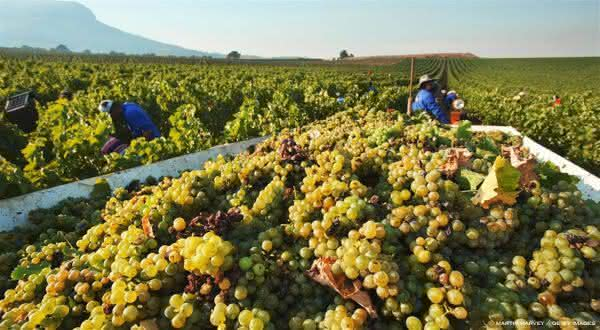 italia entre os maiores exportadores de frutas do mundo