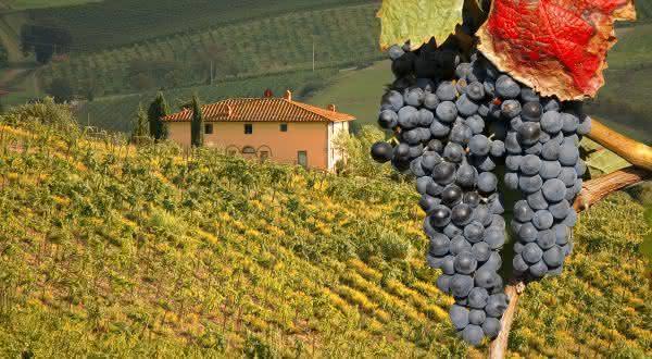 italia entre os maiores exportadores de vinhos do mundo