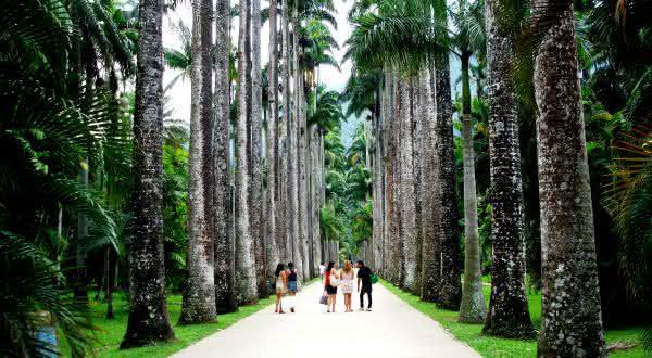 jardim botanico entre as atracões turísticas do rio de janeiro