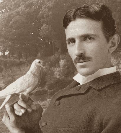 pombo entre as historias tragicas sobre a loucura de Nikola Tesla