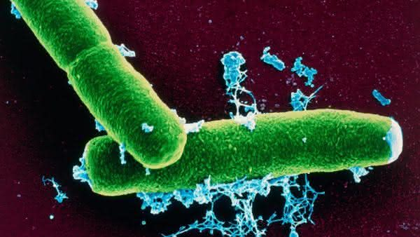 Bacillus Anthracis entre as bacterias mais perigosas do mundo
