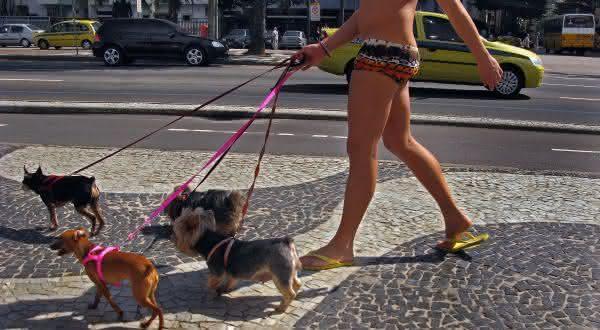 brasil entre os paises com mais caes no mundo