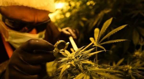 argentina entre os paises onde as drogas sao legais