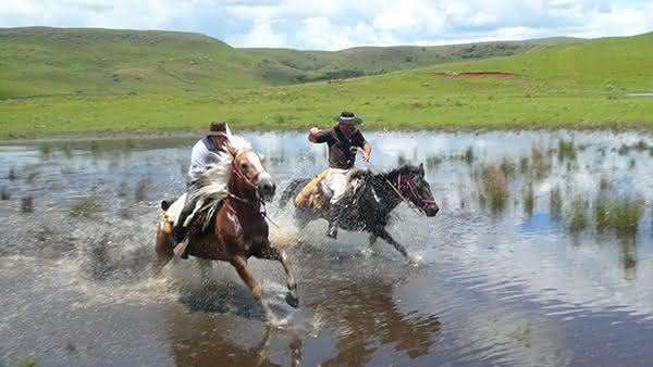 Brasil entre os paises com mais cavalos no mundo