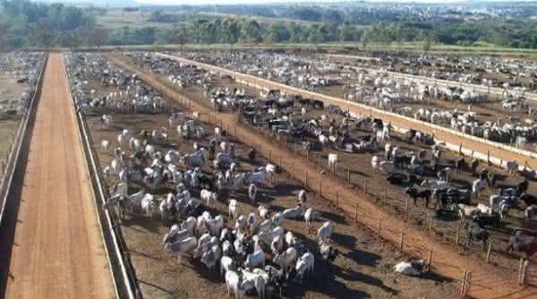 fazenda conforto entre as maiores fazendas do Brasil