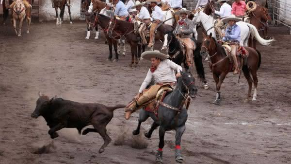 mexico entre os paises com mais cavalos no mundo